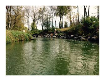 Beaver Dam River Emerald Hue