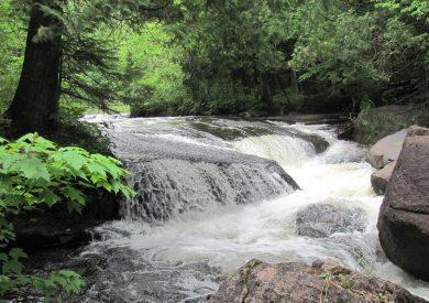 Evergreen River David Hedquist